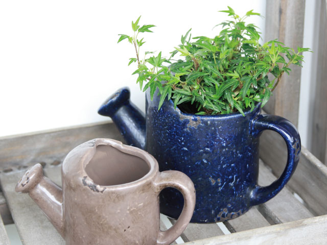 Use as a planter insted of watering can.